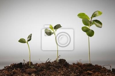 croissance agriculture